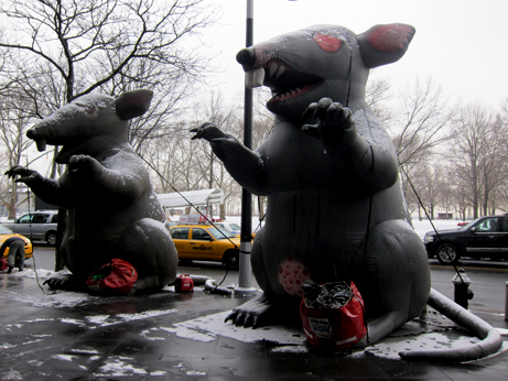 NYC Union Rat