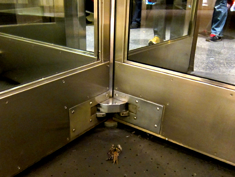 Dead Bird in Revolving Doors